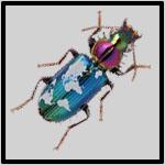 Carabidae of the World
