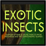 Exotic_insects