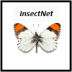 Insect_market