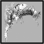Paradox_Insects